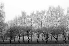 dansende bomen